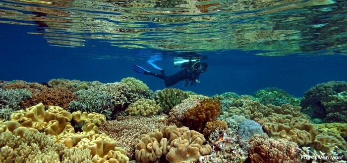 Aneka Spot Snorkeling & Diving Keren di Maluku Utara | Djava Vista